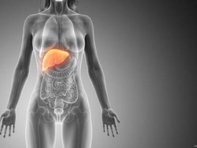 肝脏可以长寿!保护肝脏有四种方法。