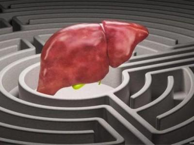 """怎样做才能防止这些病毒""""纠缠""""肝脏?不难做到。我们来看看。"""