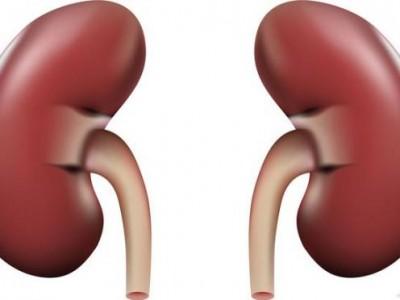 肾切除术一般不易进行,但如有严重情况,可使用。