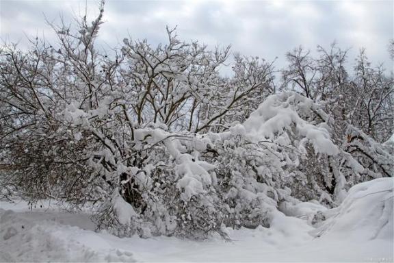 大雪节后:以大阴开始一个月!注意三件事!比你吃的任何东西都多。  你吃对了吗 威海大雪 夏季进补 北京大雪图片 古人传递信息的方法 儿歌爱的人间 身体越来越虚弱 巴氏消毒法的温度范围 2008年的大雪 中华大地的远古人类 第2张