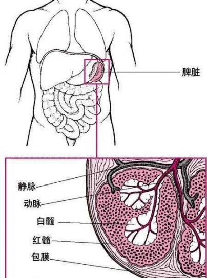 """新英格兰医学杂志:女人腹痛去看医生,医生说你的脾在""""漂移""""。  女人不痛 极品飞车15怎么漂移 女人必看 右下腹痛的原因 幸福是什么医生说 胶原蛋白粉女人我最大 运动腹痛 灵车漂移是什么梗 怀孕初期症状腹痛 费城联合vs新英格兰 第3张"""
