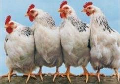早上吃鸡蛋,避开这3个误区,长期吃错危害大  宝宝腹泻可以吃鸡蛋吗 甲不喜欢吃鸡蛋 三峡工程的危害 五行健身体操下载 金正恩身体出状况 射雕之双黄蛋 美容误区 牛奶和鸡蛋可以同时吃吗 蛋白质测定仪 打美白针的危害 第16张