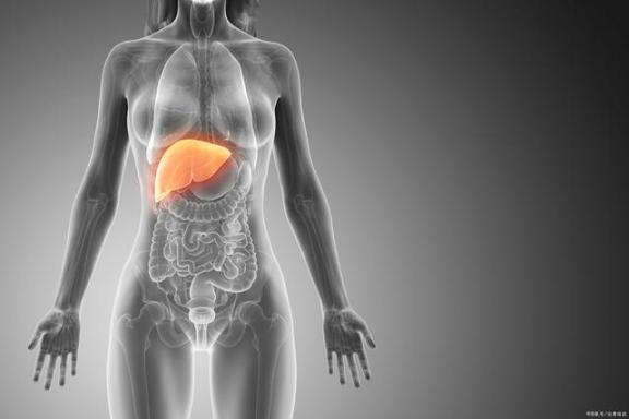 肝脏可以长寿!保护肝脏有四种方法。  如何提高肝脏功能 肝脏代谢功能 肝脏的主要生理功能 长寿圈 伏特加酒精度 驻以大使杜伟因身体原因意外去世 四十岁女人的保养 hp多功能一体机 长寿花养殖方法 生姜治疗脱发的方法 第1张