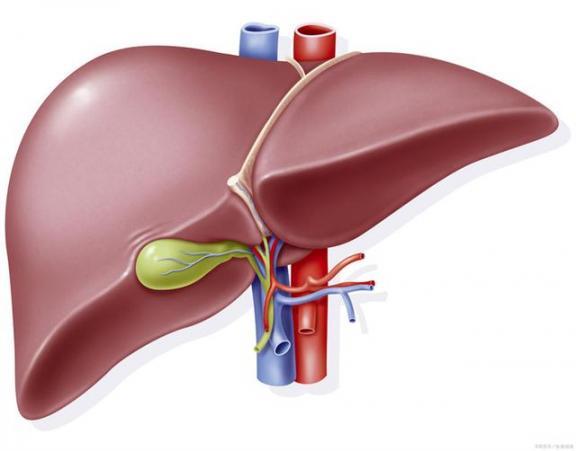 说到病毒性肝炎,你不会只知道乙型肝炎吗?区分常见情况。  这里有情况里面的歌曲 丙型病毒性肝炎 乙型肝炎症状 项目进展情况汇报 病毒性肝炎症状 进展情况 乙型肝炎的传播途径 乙型肝炎表面抗原阳性 如何区分上下联 上下联怎么区分 第2张