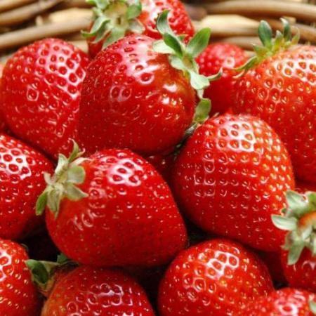 春季,适合老少食用的三种水果,新鲜可口,去春燥,正当季节放开食用。  可口可乐福娃 新鲜的刺须鲶鱼 栀子花开的季节 可口可乐小子 食用花卉 新鲜的事物 水果总动员 食用油价格走势 开学新鲜事作文 摘草莓的季节 第11张